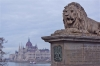 The Lion on the Chain Bridge, Budapest.